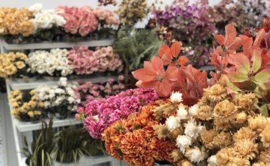 Shop onze herfstcollectie 7dagen per week in Venlo en Aalsmeer!